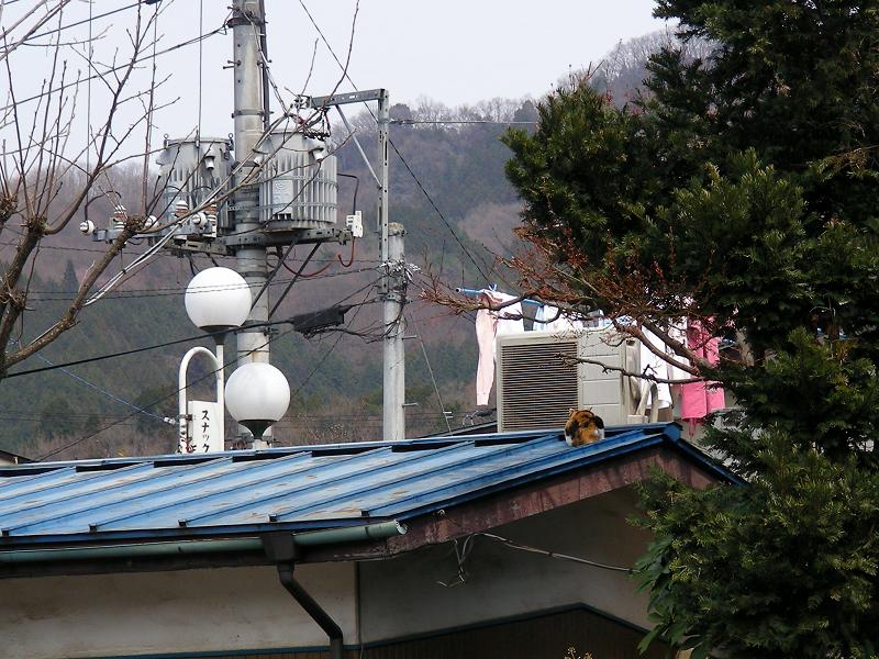 民家屋根の上の猫
