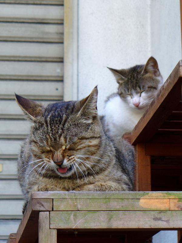 テーブルの上の猫たち1