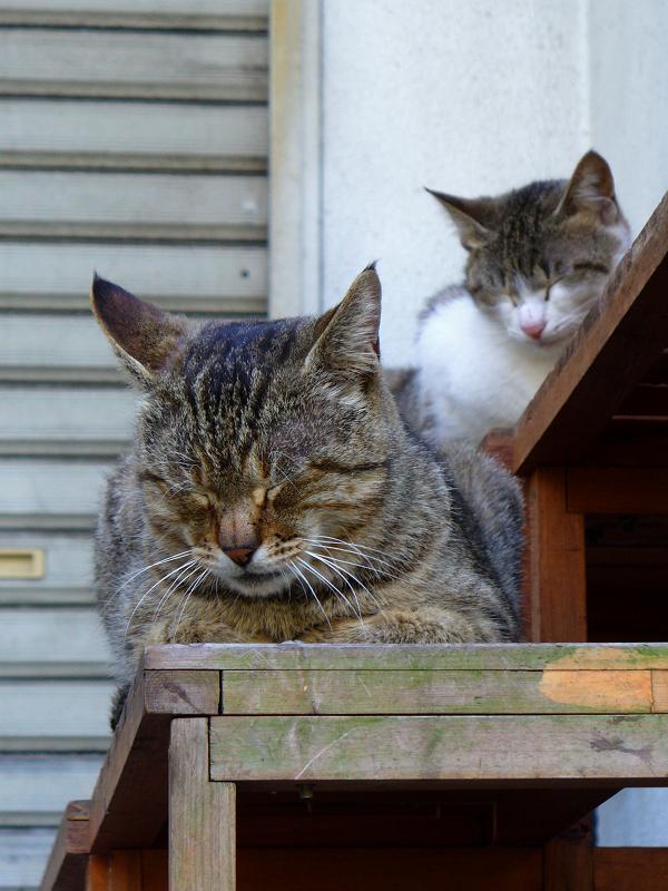 テーブルの上の猫たち2