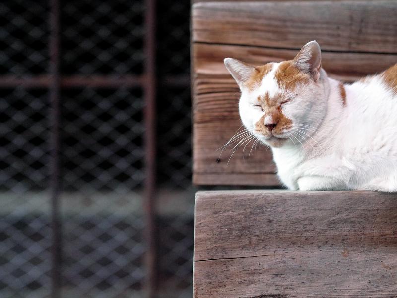 階段の端っこで横になってる茶白猫1