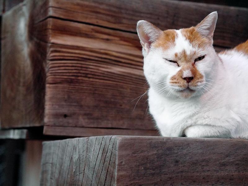 階段の端っこで横になってる茶白猫3