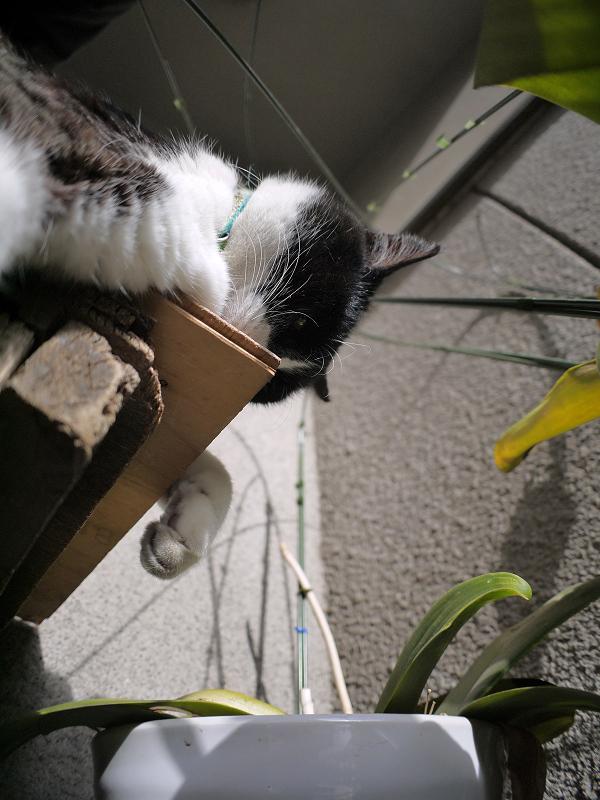 ベンチの角を嗅ぐ黒白猫1