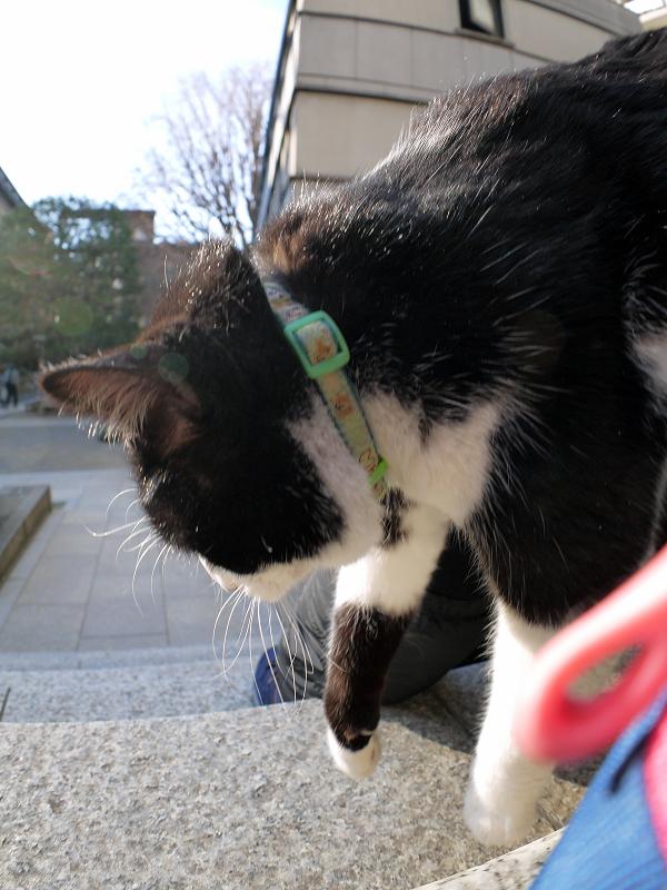 膝から降りる黒白猫