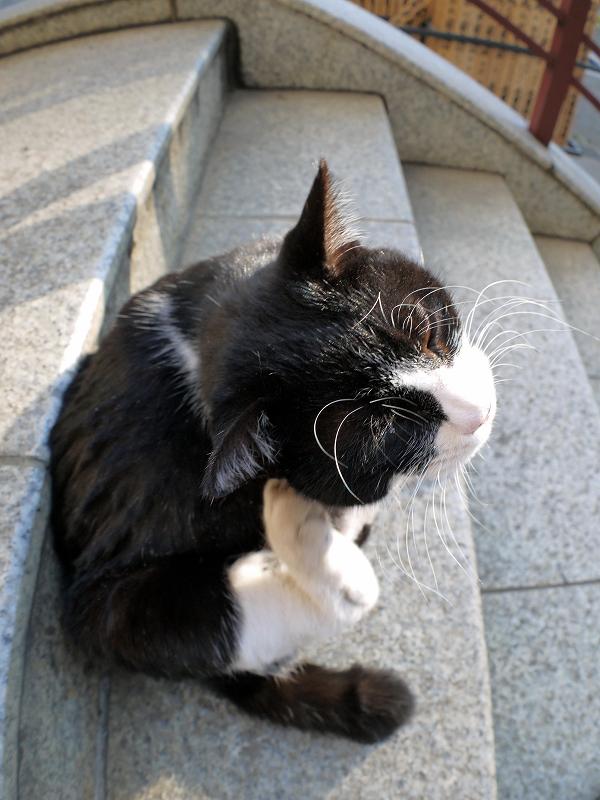 階段で耳を掻いてる黒白猫