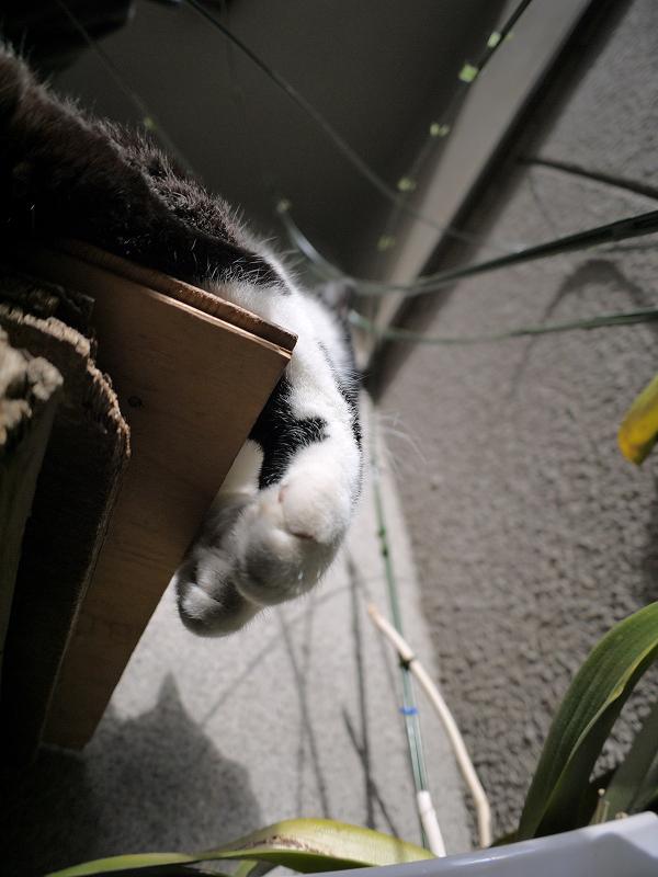 ベンチの角を嗅ぐ黒白猫3