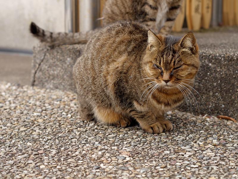 出て来たキジトラ猫