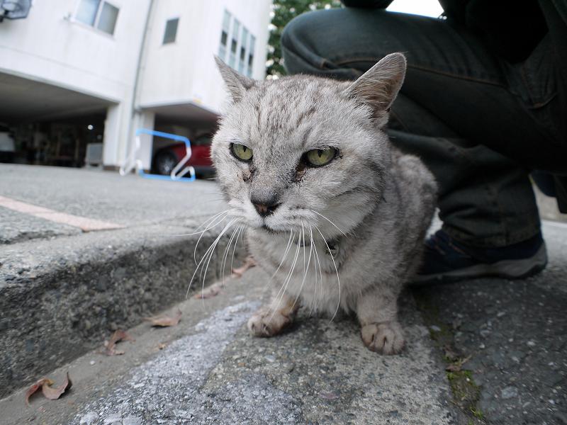 思い出した銀猫3