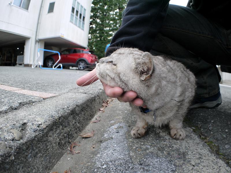 思い出した銀猫4