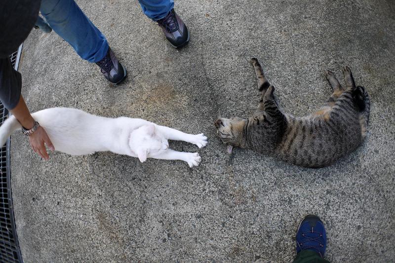 足元のキジトラ猫と白猫2