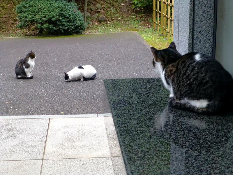 映り込みのキジ白猫3