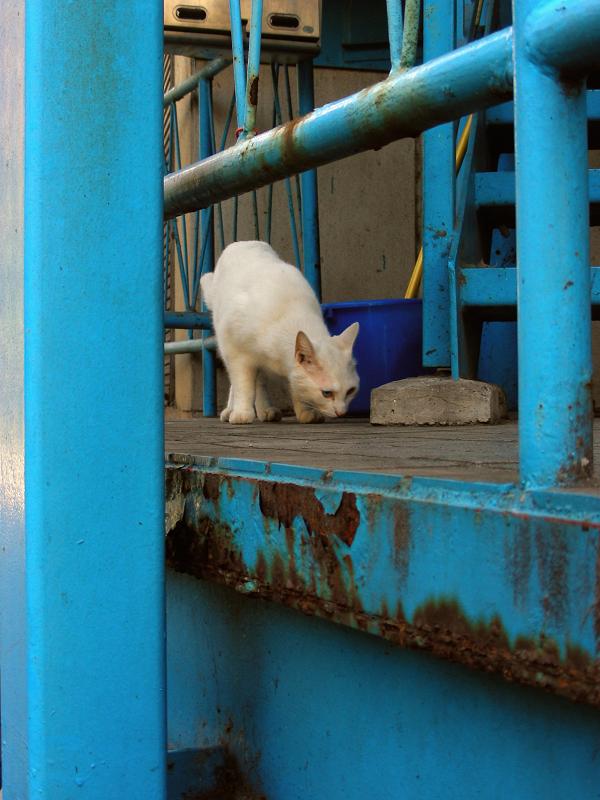 登場した白猫1