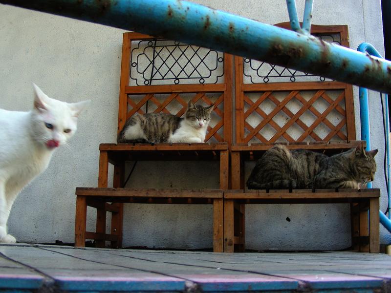 登場した白猫2