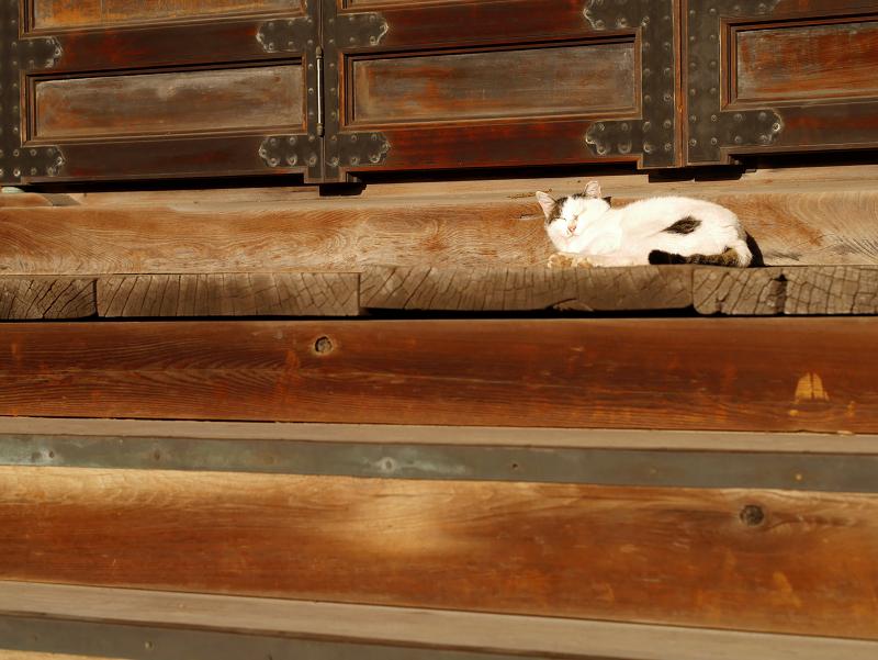 お堂前階段の白キジ猫1