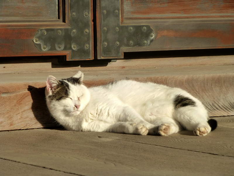 お堂前階段の白キジ猫2