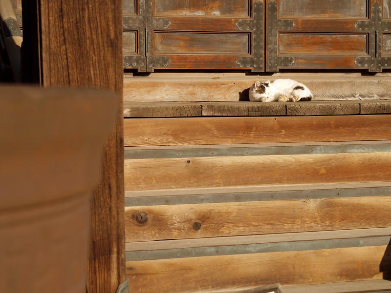 お堂前階段の白キジ猫3