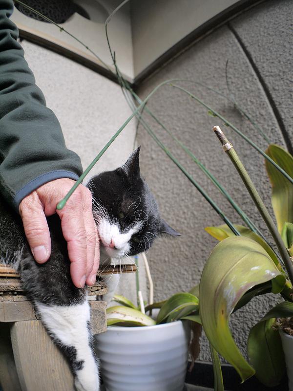 ベンチで手を噛む黒白猫1