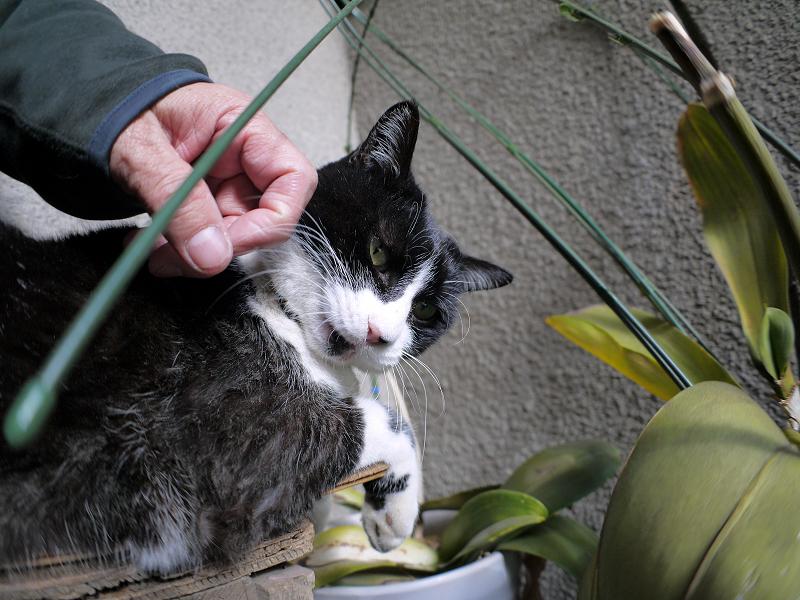 ベンチで手を噛む黒白猫2