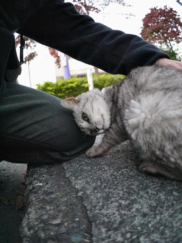 仲良しになった銀色猫1
