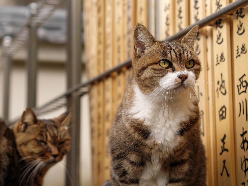 卒塔婆と猫たち1