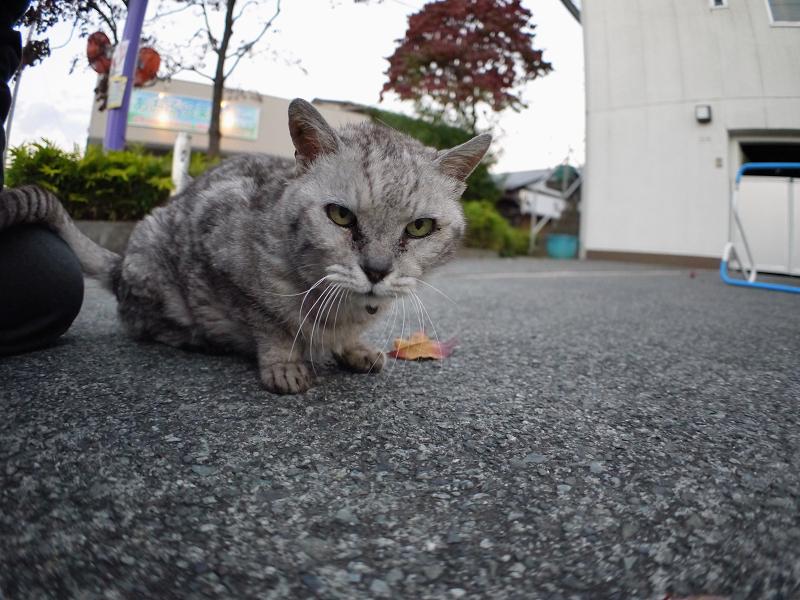 仲良しになった銀色猫2