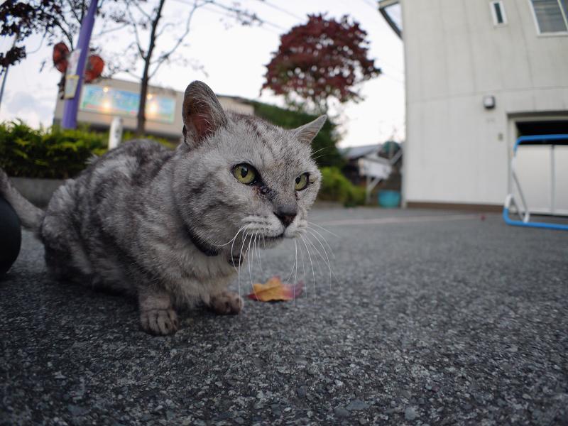仲良しになった銀色猫3