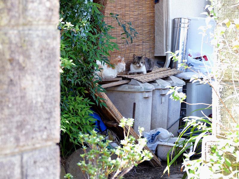 玄関先のゴミ箱と猫たち1