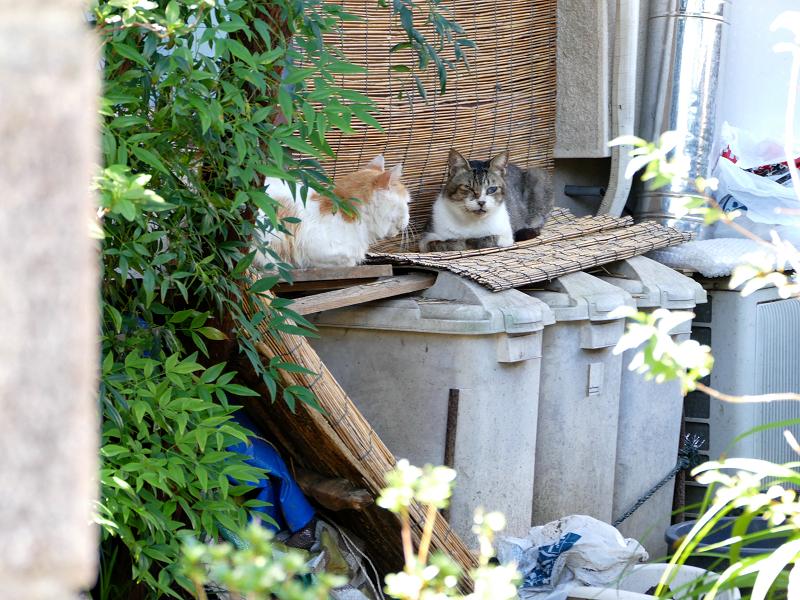 玄関先のゴミ箱と猫たち2