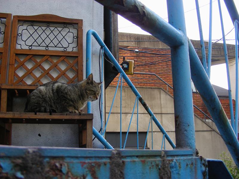 鉄柱とキジトラ猫1