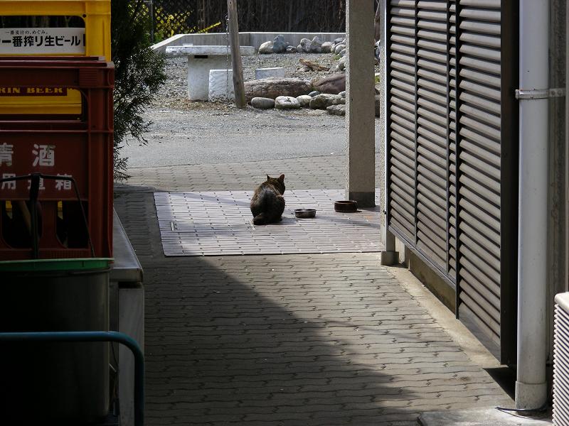玄関前の猫1
