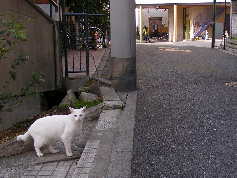 白猫の行動2