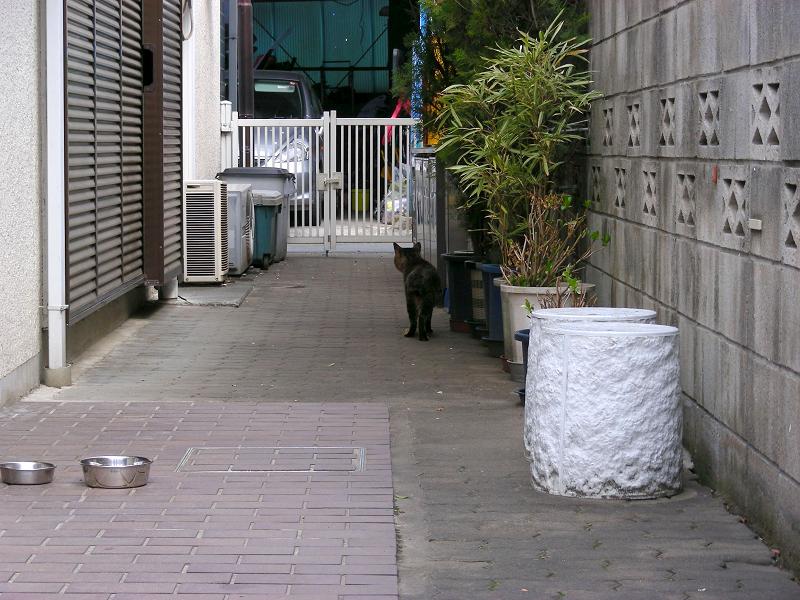 玄関前の猫2