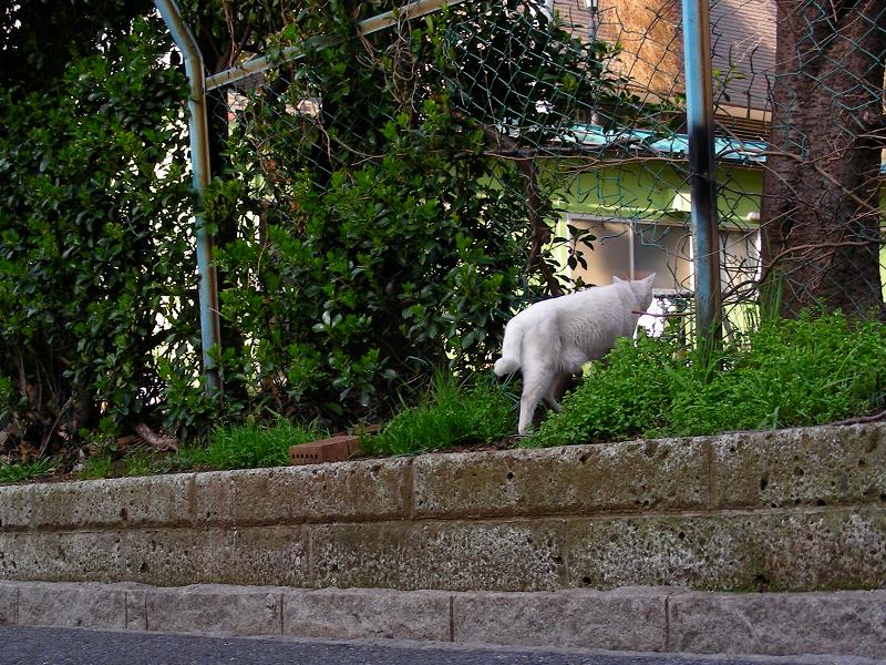 白猫の行動3