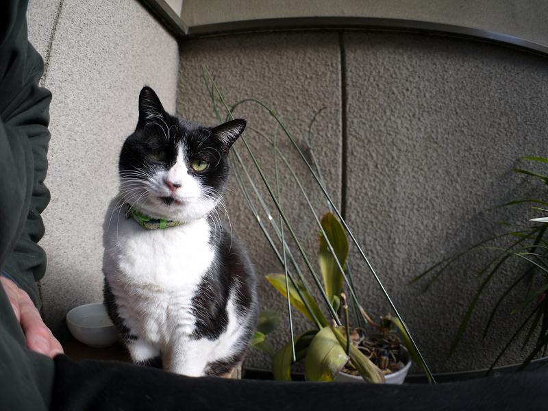 ベンチに乗って見てる黒白猫1