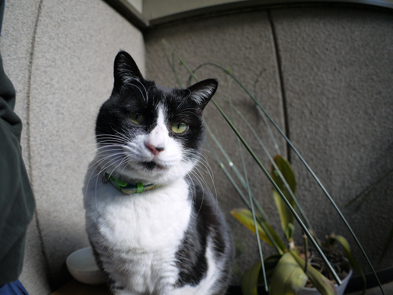 ベンチに乗って見てる黒白猫3
