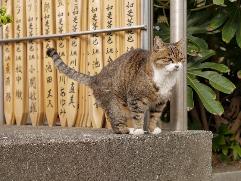 卒塔婆前の猫1
