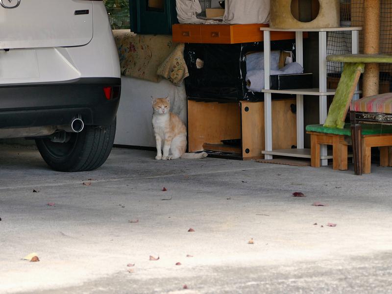 ガレージの茶白猫1