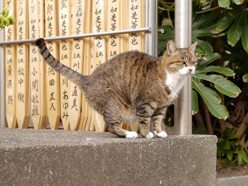 卒塔婆前の猫2