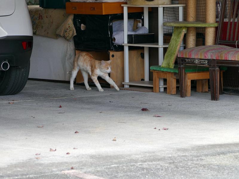 ガレージの茶白猫2