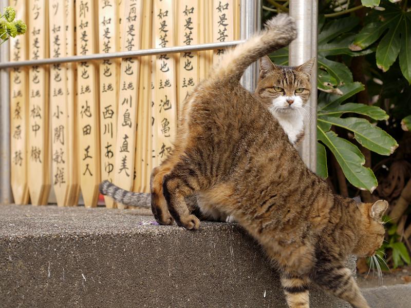 卒塔婆前の猫3