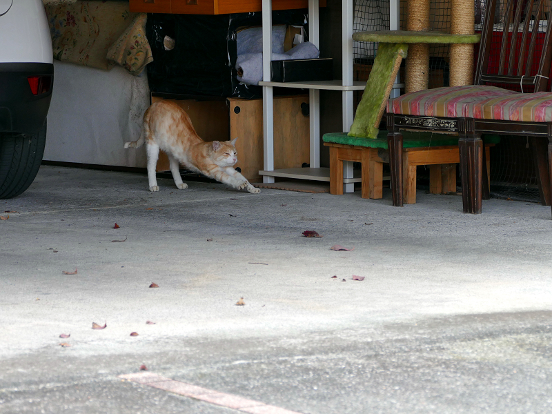 ガレージの茶白猫3