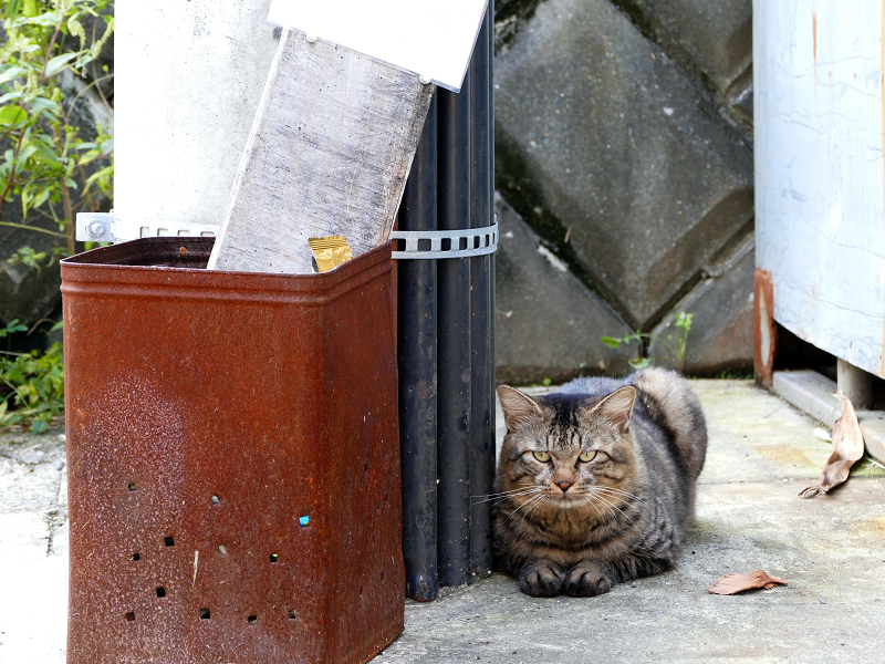 天誅の横のキジトラ猫3