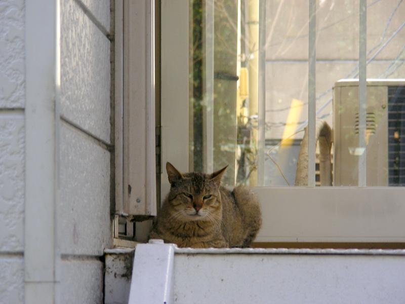 片隅で香箱を組んでるキジトラ猫1