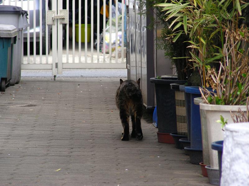 向こうへ歩いて行くキジトラ猫1