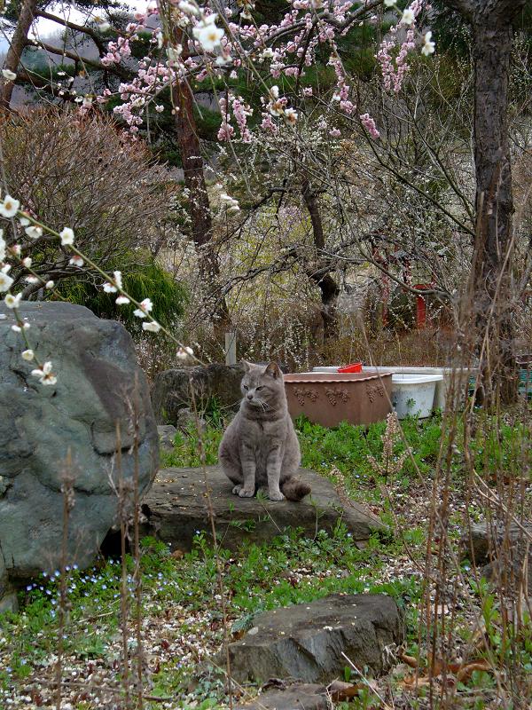 花とグレー猫1