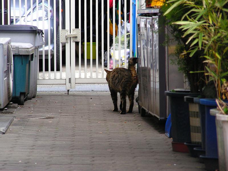 向こうへ歩いて行くキジトラ猫2