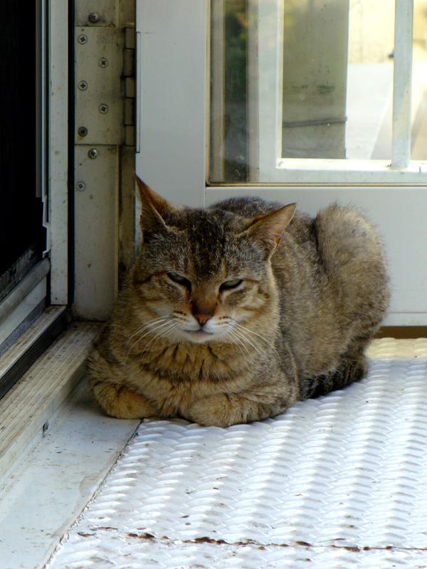 片隅で香箱を組んでるキジトラ猫2
