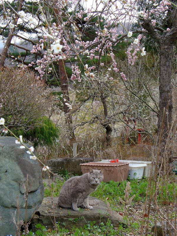花とグレー猫2