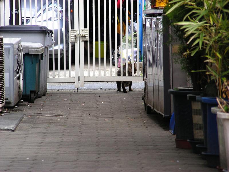 向こうへ歩いて行くキジトラ猫3