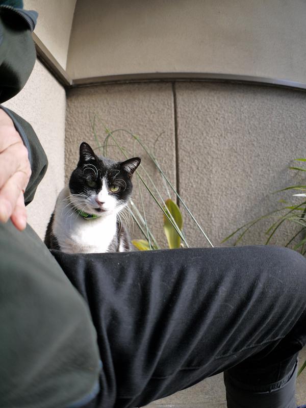 意地を張ってる風な黒白猫1