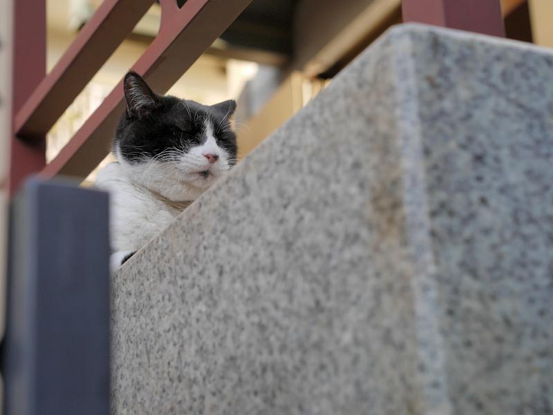 タイルの上で香箱の黒白猫1